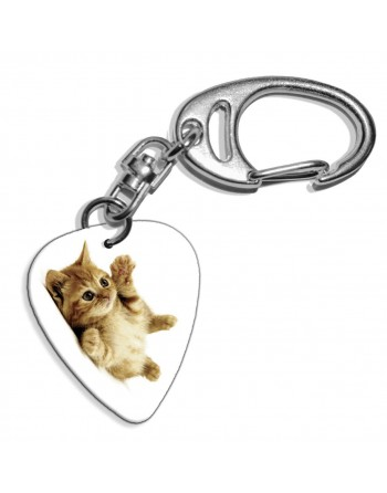 Kitten lieve kat plectrum...