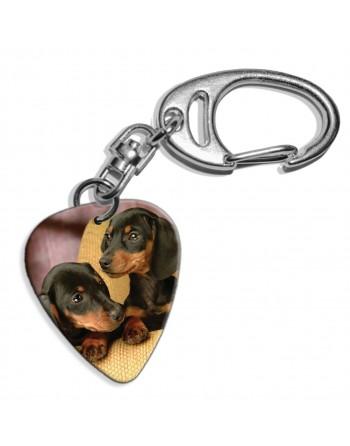Dachshund puppies pick key...