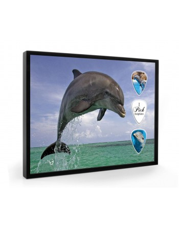 Dolphins pick display framed