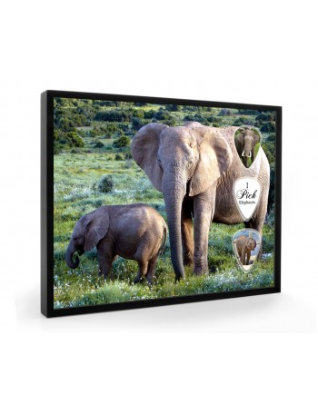 Elephant pick display framed