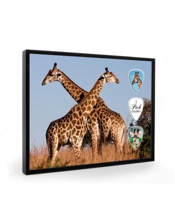 Giraffe pick display framed
