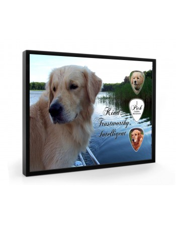 Golden Retriever dog pick...