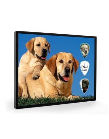 Labrador Retriever dog pick...