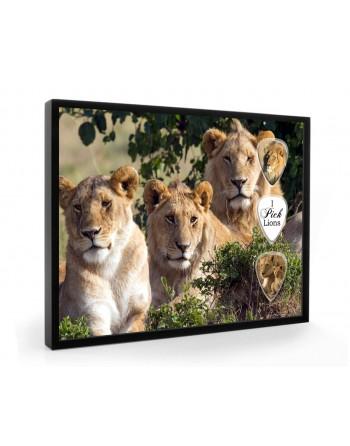 Lion pick display framed