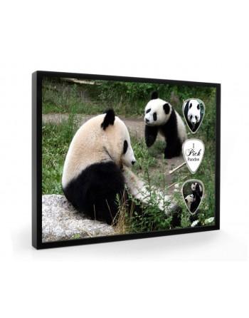 Pandas pick display framed