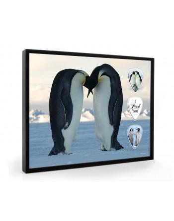 Penguins pick display framed