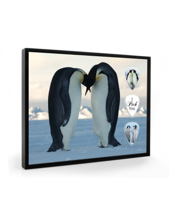 Pinguins plectrumdisplay...