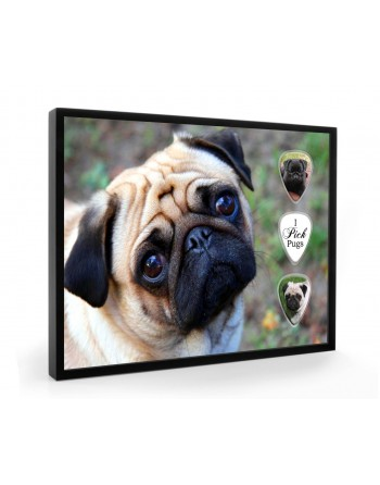 Pug dog pick display framed