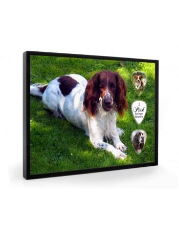 Springer Spaniel hond...