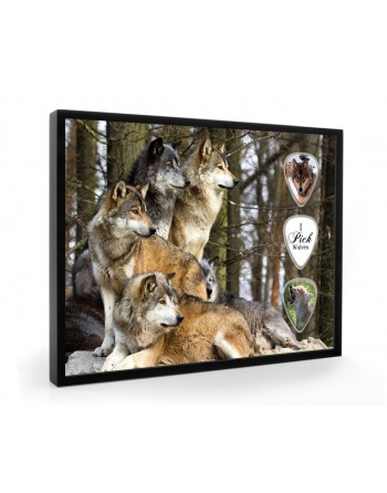 Wolf pick display framed