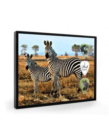 Zebras pick display framed